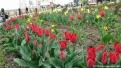 flori2011-5
