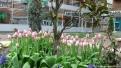 flori2011-62