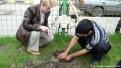 Plantare artari